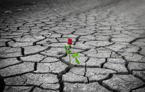 """All our children are precious """"Roses in Concrete"""""""